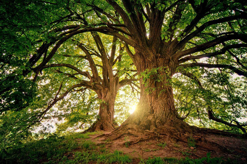 Klassieke homeopathie - kracht door natuur